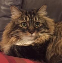 Emily the Cat