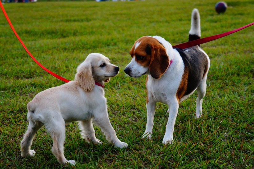 Top 7 Dog Parks in SanFrancisco