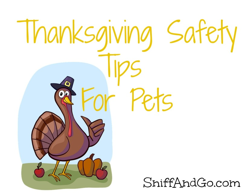 Pets and Thanksgiving: Six Safety Tips &Tricks