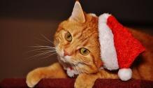 cat-1898635_960_720