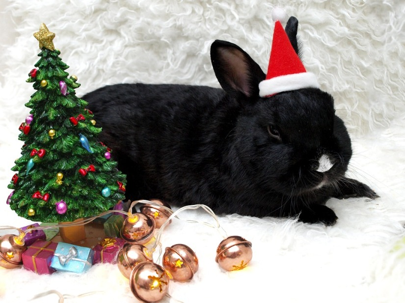 Pets As Gifts: Things You Need ToConsider